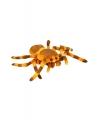 Pluche knuffel spin 27 cm